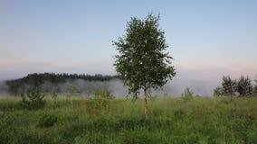 Mañana de niebla del verano con el birdsong, pájaros que cantan, usignuolo, birdsong de la primavera metrajes