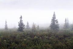 Mañana de niebla en Denali Alaska fotografía de archivo libre de regalías