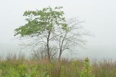 Mañana de niebla en Maine costero imagen de archivo