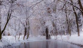 Mañana de niebla en parque de la ciudad Fotos de archivo libres de regalías