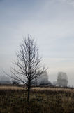 Mañana de niebla en prado en otoño Foto de archivo