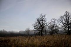 Mañana de niebla en prado en otoño Imagen de archivo