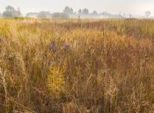 Mañana de niebla en un prado en la zona de la bosque-estepa de Ucrania Imágenes de archivo libres de regalías