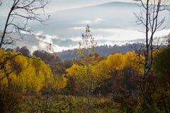 Mañana de Osennee en un bosque de la montaña Foto de archivo libre de regalías