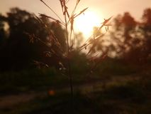 Mañana de Sun Fotos de archivo
