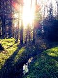 Mañana del bosque Imágenes de archivo libres de regalías