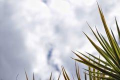 Mañana del cielo Foto de archivo