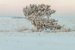 Mañana del invierno Imágenes de archivo libres de regalías