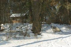 Mañana del invierno en el bosque fotos de archivo