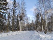 Mañana del invierno en el camino de madera Foto de archivo libre de regalías