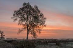 Mañana del invierno en Giethoorn con el abedul Fotografía de archivo libre de regalías