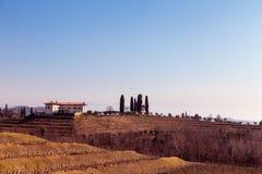 Mañana del invierno en los viñedos de Collio, Italia Fotos de archivo
