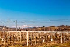 Mañana del invierno en los viñedos de Collio, Italia Imagen de archivo