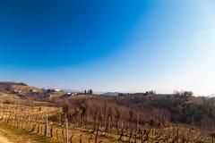 Mañana del invierno en los viñedos de Collio, Italia Foto de archivo