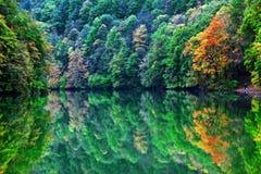 Mañana del lago forest en otoño Imagen de archivo libre de regalías