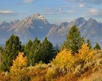 Mañana del otoño, el Tetons Foto de archivo libre de regalías
