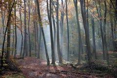 mañana del otoño en el bosque Imagen de archivo