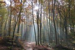 mañana del otoño en el bosque Fotos de archivo libres de regalías