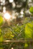 Mañana del rocío del campo de color de verde de hierba de la hoja Imagen de archivo libre de regalías