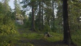 Mañana del verano en bosque místico Hermosas vistas en el bosque Bosque de hadas Fotografía de archivo