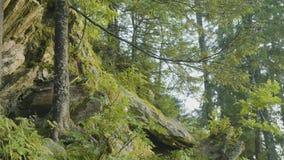Mañana del verano en bosque místico Hermosas vistas en el bosque Bosque de hadas Fotografía de archivo libre de regalías