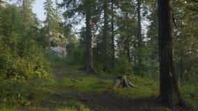 Mañana del verano en bosque místico Hermosas vistas en el bosque Bosque de hadas Imágenes de archivo libres de regalías