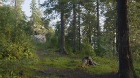 Mañana del verano en bosque místico Hermosas vistas en el bosque Bosque de hadas Imagen de archivo