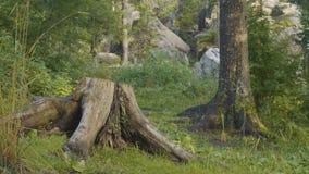 Mañana del verano en bosque místico Hermosas vistas en el bosque Bosque de hadas Foto de archivo