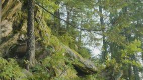 Mañana del verano en bosque místico Hermosas vistas en el bosque Bosque de hadas Foto de archivo libre de regalías