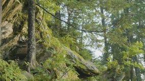 Mañana del verano en bosque místico Hermosas vistas en el bosque Bosque de hadas Fotos de archivo libres de regalías