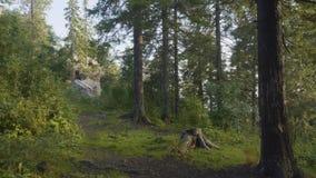 Mañana del verano en bosque místico Hermosas vistas en el bosque Bosque de hadas Imagen de archivo libre de regalías