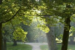 Mañana del verano en el parque imágenes de archivo libres de regalías