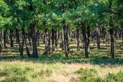 Mañana del verano en un bosque verde Imagen de archivo libre de regalías