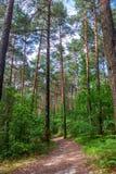 Mañana del verano en un bosque verde Fotografía de archivo libre de regalías