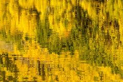 Mañana en Belces marrón Aspen CO Imagen de archivo libre de regalías