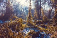 Mañana en bosque Foto de archivo