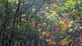 Mañana en bosque del otoño metrajes