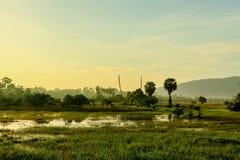 Mañana en campo verde Foto de archivo