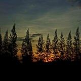 Mañana en el bosque foto de archivo libre de regalías