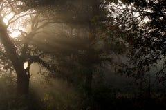 Mañana en el bosque Fotografía de archivo libre de regalías