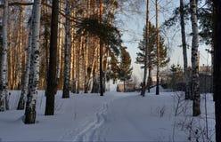 Mañana en el bosque del invierno Foto de archivo libre de regalías