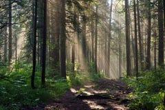 Mañana en el bosque profundo Imagenes de archivo