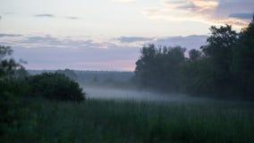 Mañana en el campo en verano fotos de archivo
