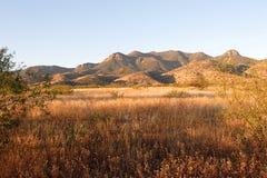 Mañana en el desierto de Arizona Foto de archivo libre de regalías