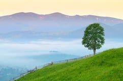 Mañana en el paisaje del pueblo con el árbol solo Imagenes de archivo