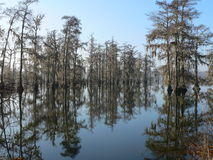 Mañana en el pantano Fotos de archivo libres de regalías