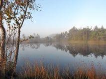 Mañana en el pantano, Lituania Fotografía de archivo
