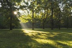 Mañana en el parque Imagenes de archivo