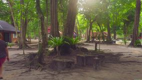 Mañana en la isla de Similan metrajes