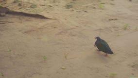 Mañana en la isla de Similan almacen de metraje de vídeo